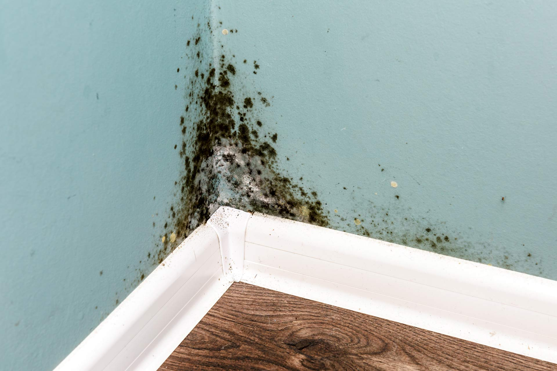 How to Deal with Mold in Your Home?