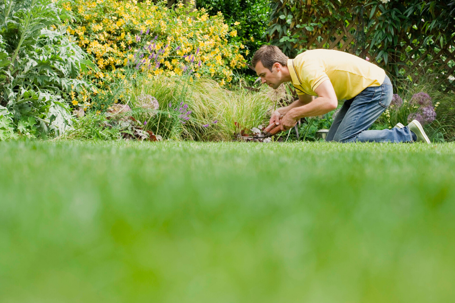 5 Easy Ways To Improve Your Lawn