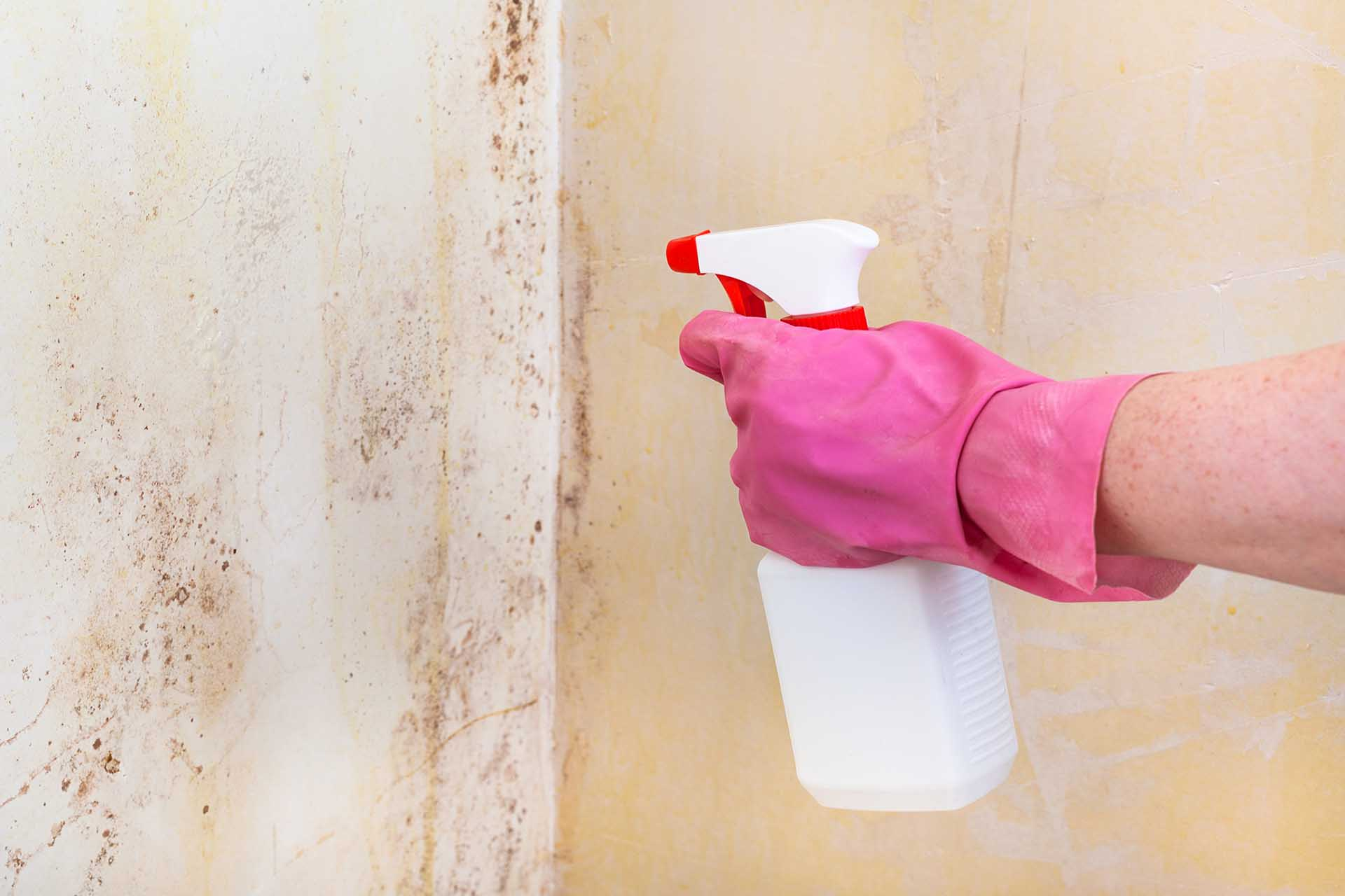 Top Tips for Controlling Mold